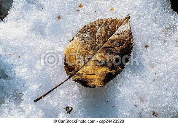 Fallen leaf - csp24423320