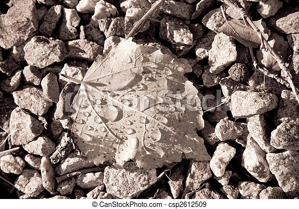 Fallen leaf - csp2612509