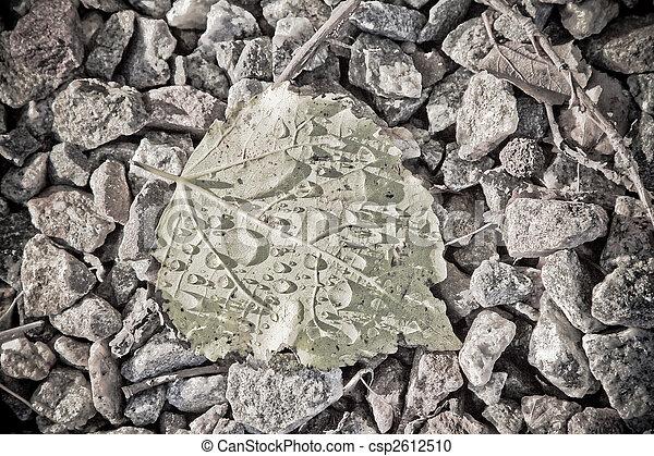 Fallen leaf - csp2612510