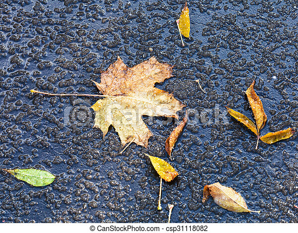 fallen leaves in melting first snow in autumn - csp31118082