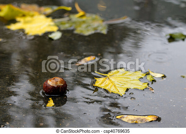 fallen leaves in the water - csp40769635