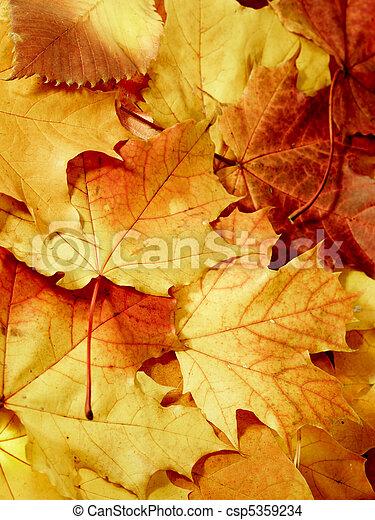 fallen maple multi-coloured leaves - csp5359234
