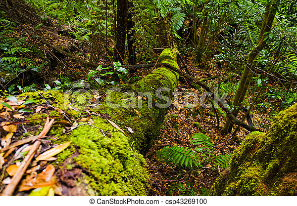 Fallen mossy tree in the Australian bush - csp43269100