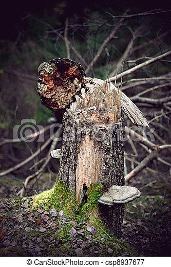 Fallen old tree - csp8937677