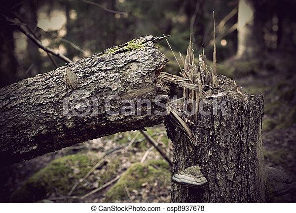 Fallen old tree - csp8937678