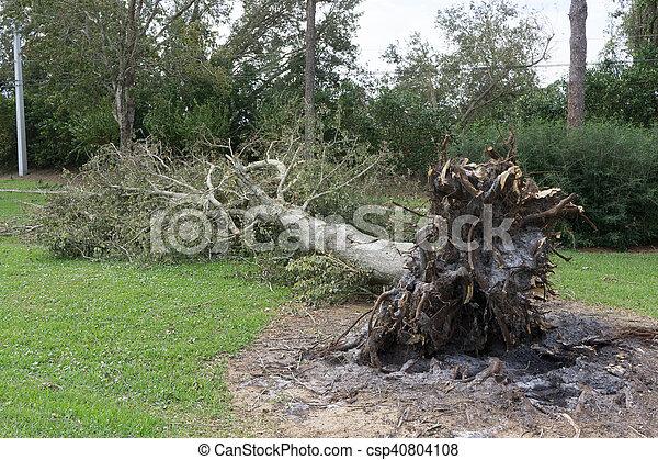 Fallen Tree During Hurricane - csp40804108