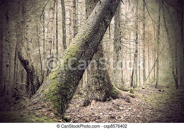 Fallen tree in spooky forest - csp8576402
