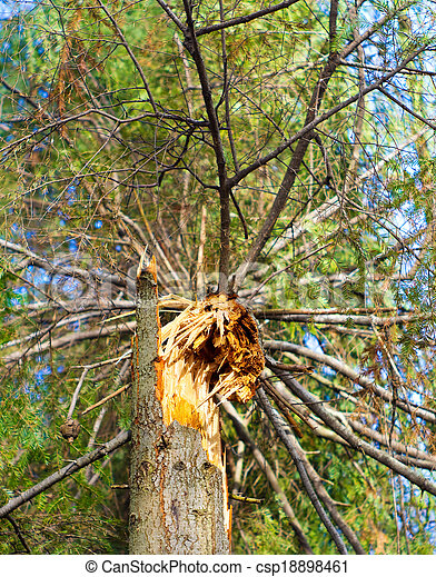 Fallen tree in the forest - csp18898461