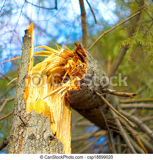 Fallen tree in the forest - csp18899020