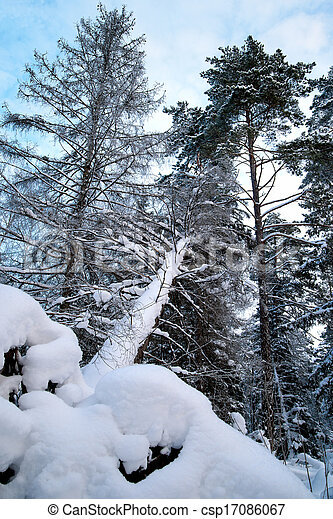 fallen tree in winter forest - csp17086067