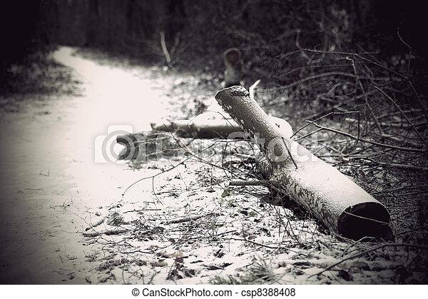 Fallen tree - csp8388408