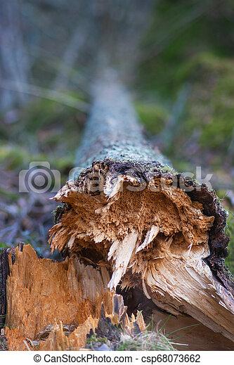 Fallen tree - csp68073662