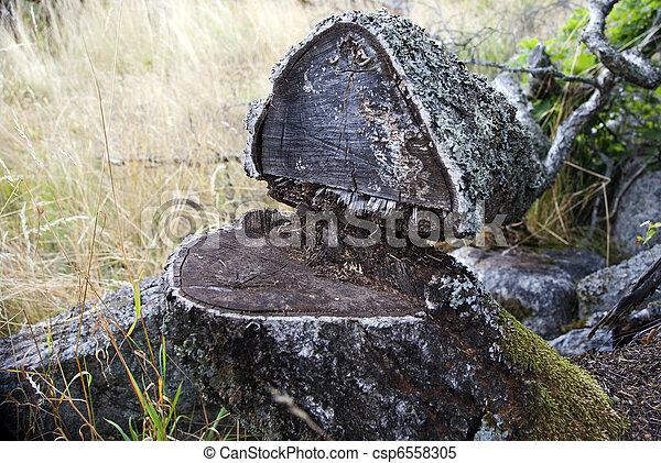Fallen tree - csp6558305
