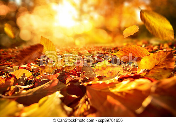 Falling Autumn Leaves In Lively Sunlight Lively Closeup Of Falling Autumn Leaves With Vibrant Backlight From The Sun