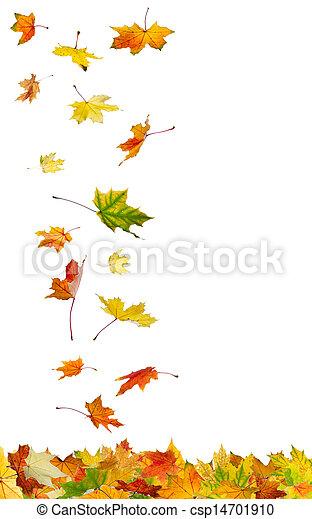 Falling autumn leaves - csp14701910