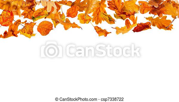 Falling autumn leaves - csp7338722