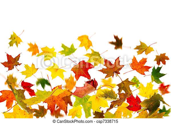 Falling leaves - csp7338715