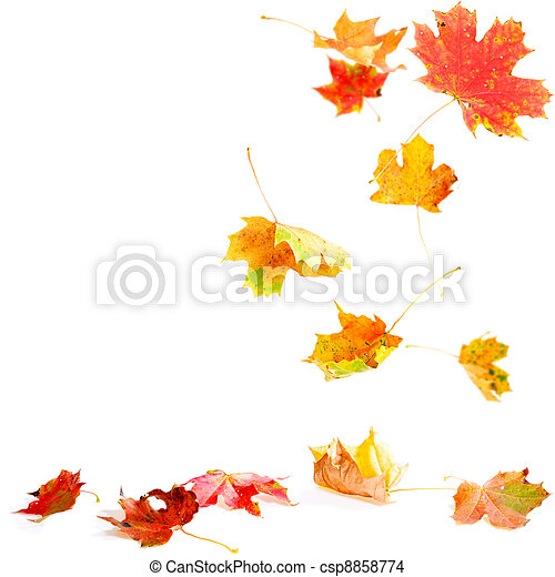 Falling Maple Leaves - csp8858774
