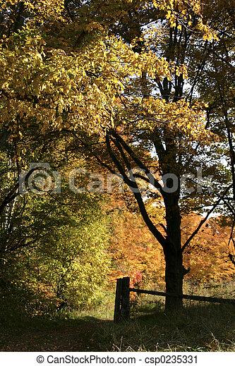 Falling woods - csp0235331
