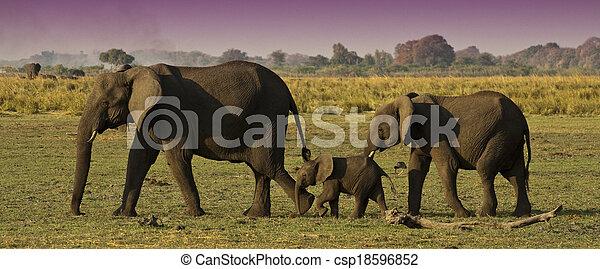 Elefantenfamilie - csp18596852
