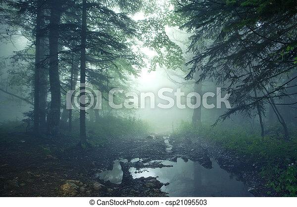 fantasía, bosque - csp21095503