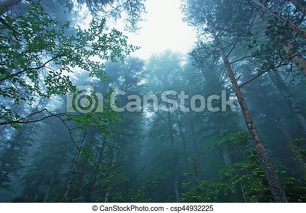 Bosque de niebla de fantasía - csp44932225