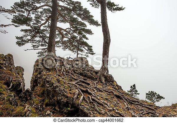 Bosque de niebla de fantasía - csp44001662