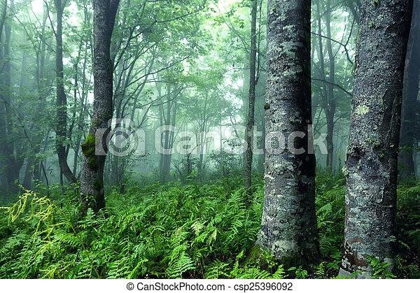 Bosque de fantasía - csp25396092