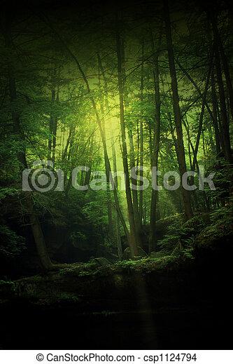 fantasia, floresta - csp1124794