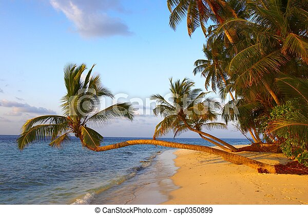 FANTASTIC SUNSET BEACH WITH PALM TREES - csp0350899