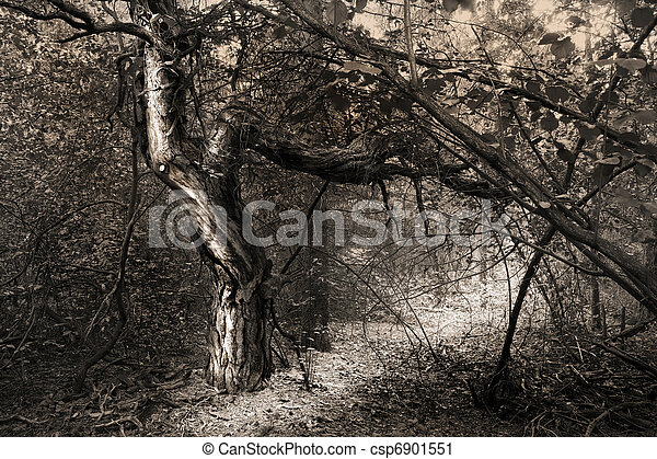Fantasy tree in forest - csp6901551