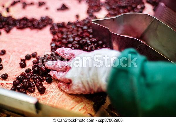 fanyar, cseresznye, feldolgozás, gépek - csp37862908