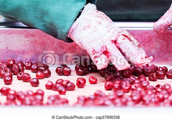 fanyar, cseresznye, feldolgozás, gépek - csp37906336