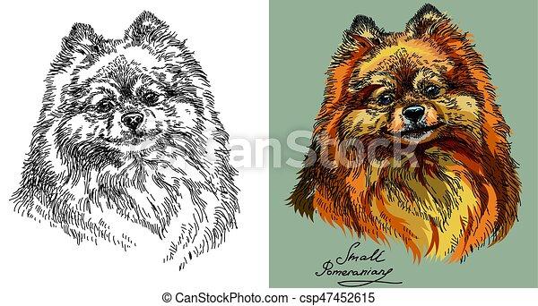 Farbe Klein Weißes Schwarz Pomeranian