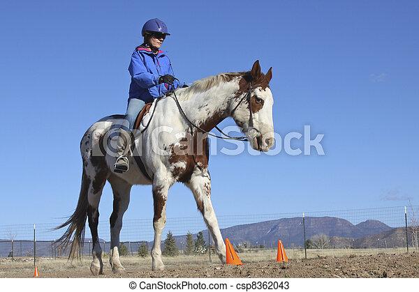 Maltes Pferd im Training - csp8362043