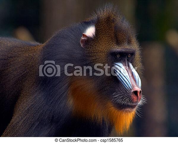 Atemberaubend Bilder Von Affen Färben Bilder - Dokumentationsvorlage ...