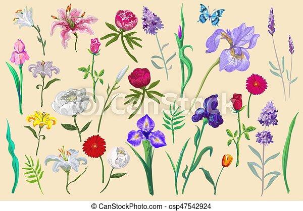 Farfalla Differente Redigere Isolato Collezione Disegno Facile