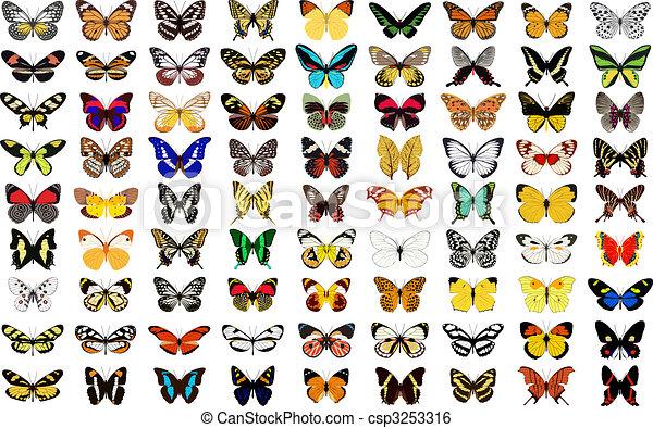 farfalla - csp3253316
