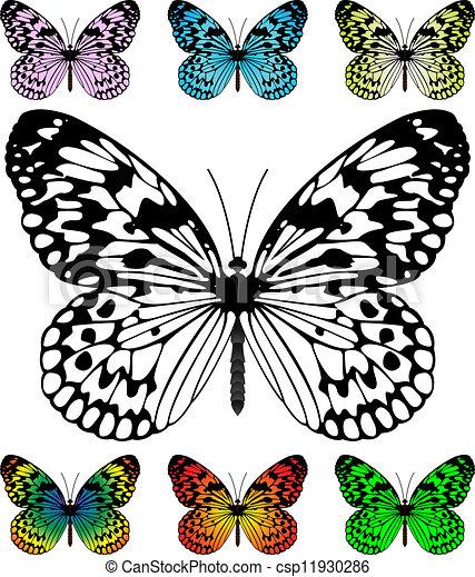 Farfalla Vettore Sagoma Campioni Farfalla Vettore Facile