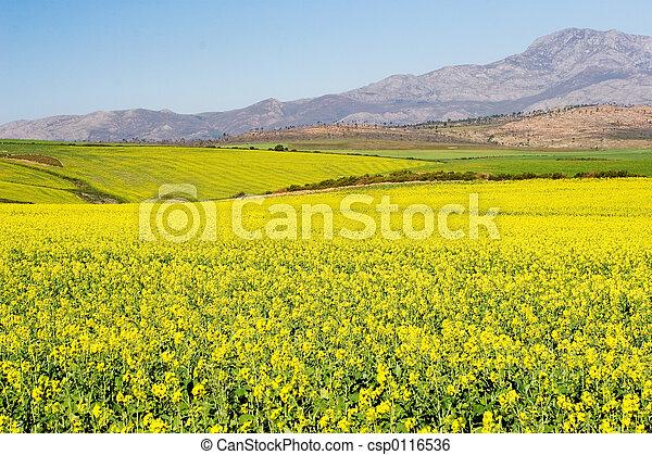 Farm #2 - csp0116536