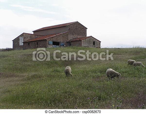 Farm and grazing lamb - csp0082670