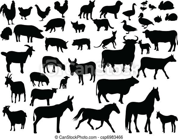 Vector Line Art Animals : Farm animals collection vector