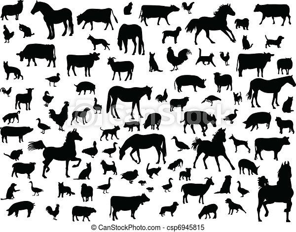 farm animals - csp6945815