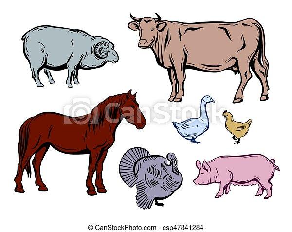 farm animals color sketches