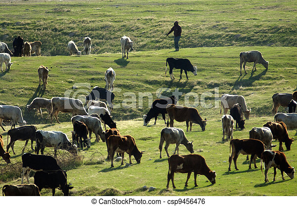 Farm Animals - Cows - csp9456476