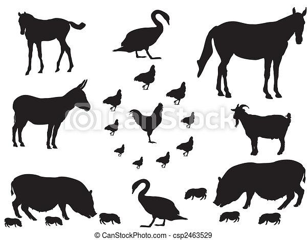 farm animals - csp2463529