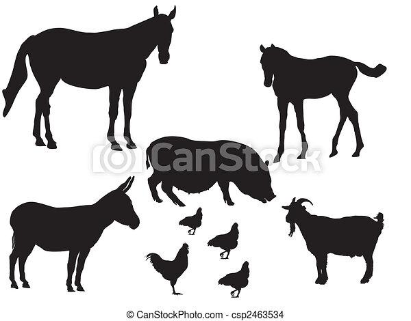 farm animals - csp2463534