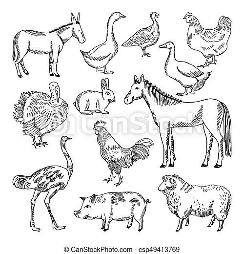 Farm Animals Set In Hand Drawn Style Vector Illustrations Animal