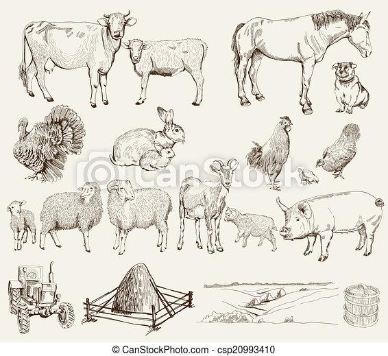farm animals - csp20993410