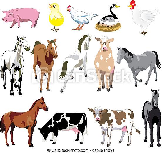 Farm Animals - csp2914891
